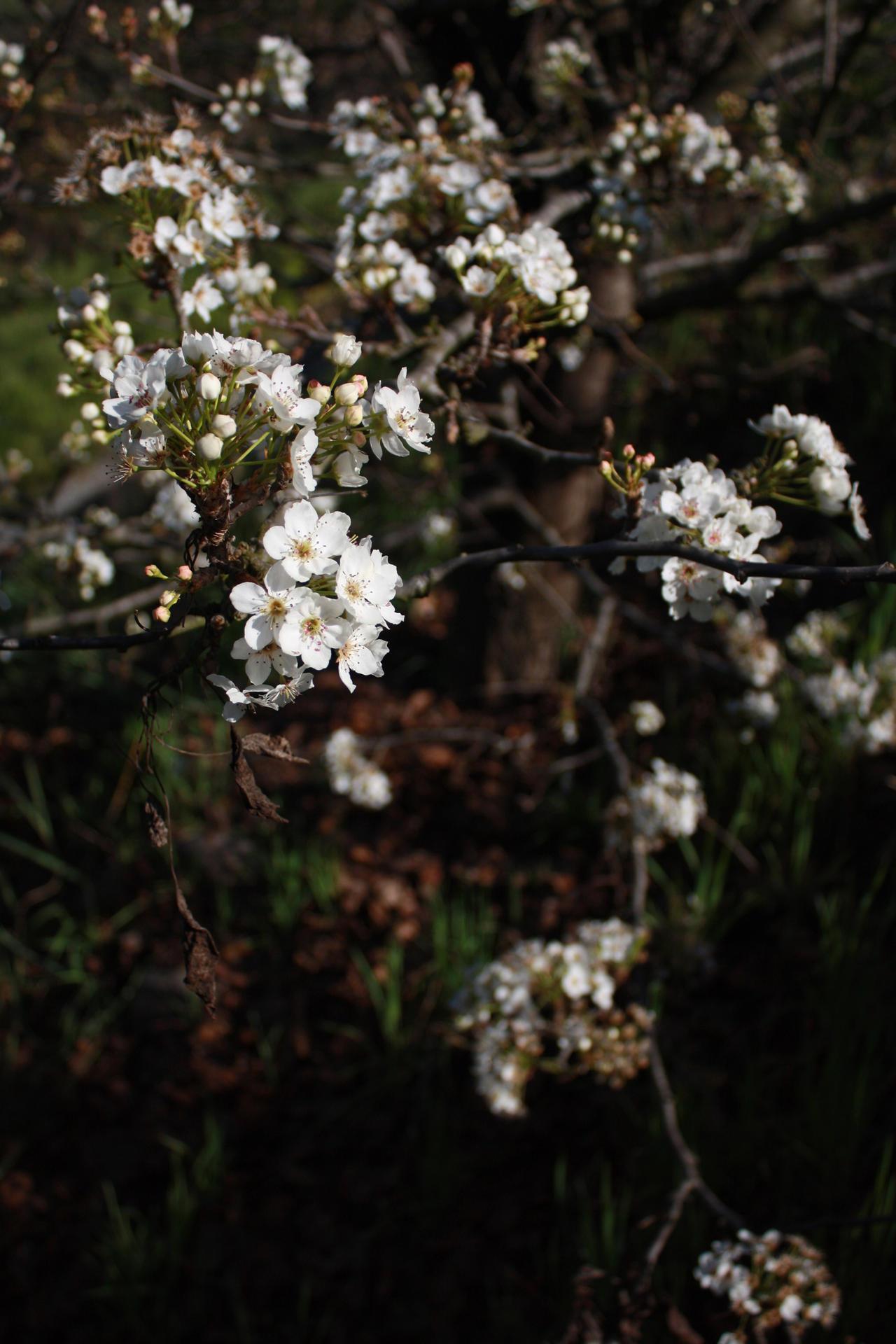 White Tree Flowers 2 by Reitanna Seishin on DeviantArt