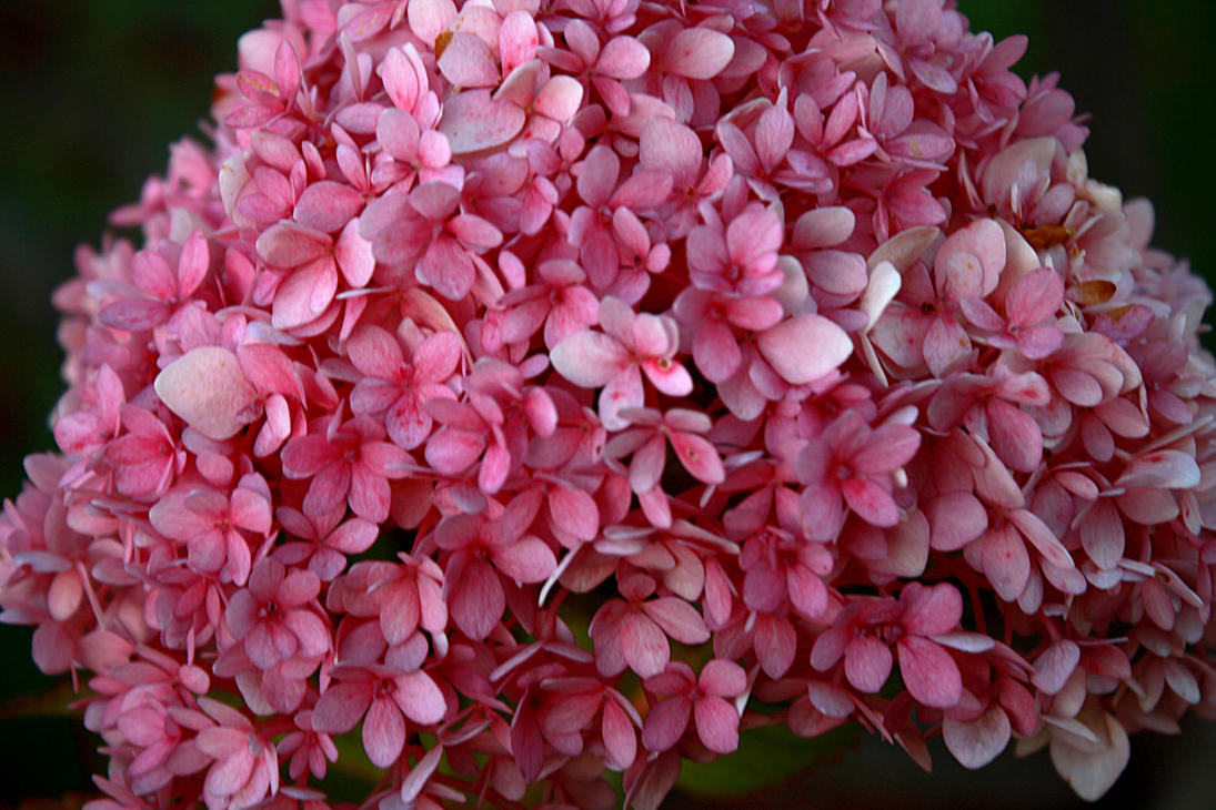Little pink flowers by reitanna seishin on deviantart little pink flowers by reitanna seishin mightylinksfo