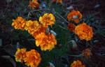 Yellow Carnations I Think by Reitanna-Seishin