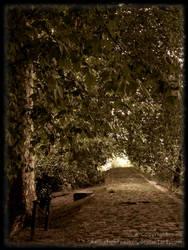 A Walk In The Woods by CookieMetal