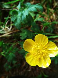 Yellow. by CookieMetal
