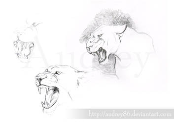 Panther sketches