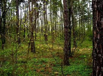 Woods by Hermit-cz