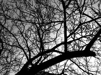 Climb Up The Tree I