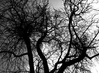 Climb Up The Tree II by Hermit-cz