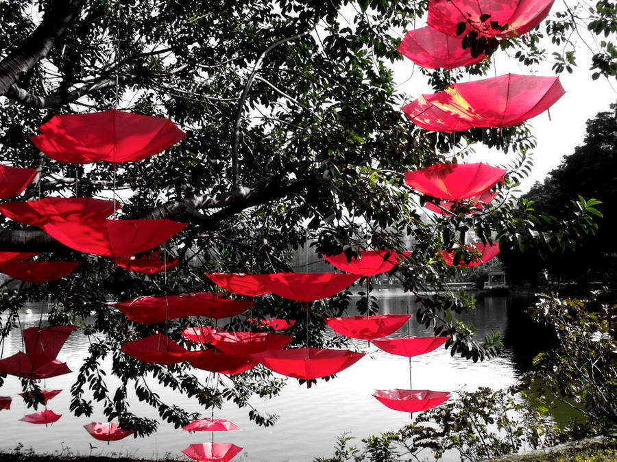 Umbrella Tree by Hermit-cz