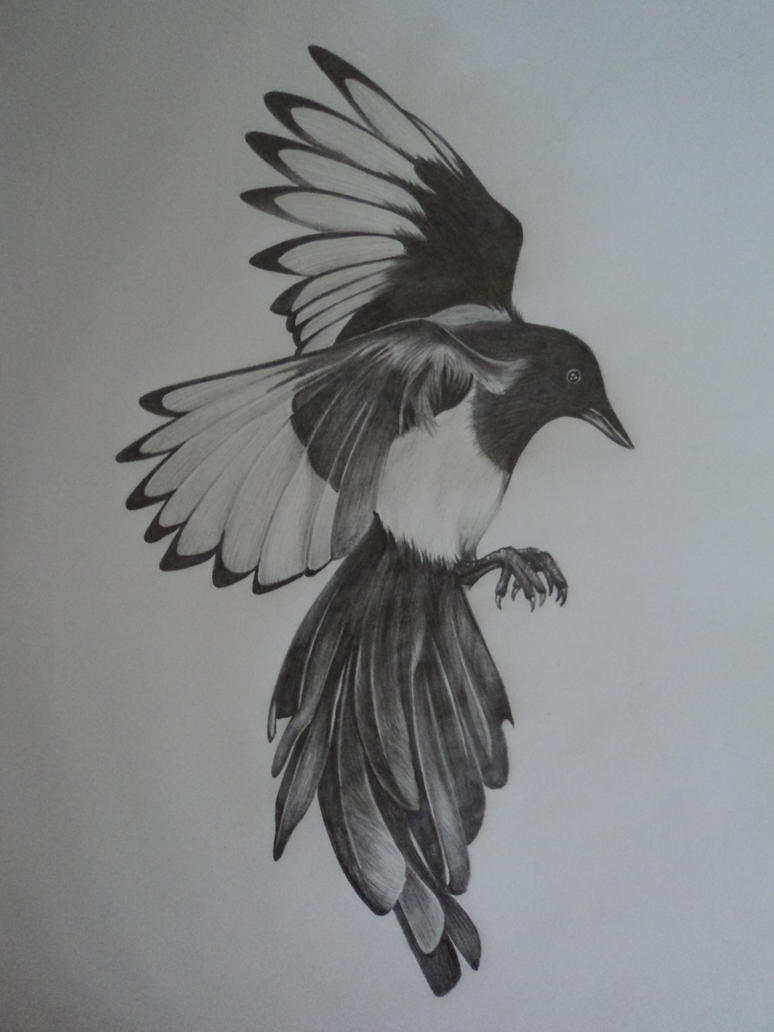 Traditional magpie tattoo - photo#49
