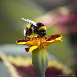 wanna BEE alone ... by OrazioFlacco