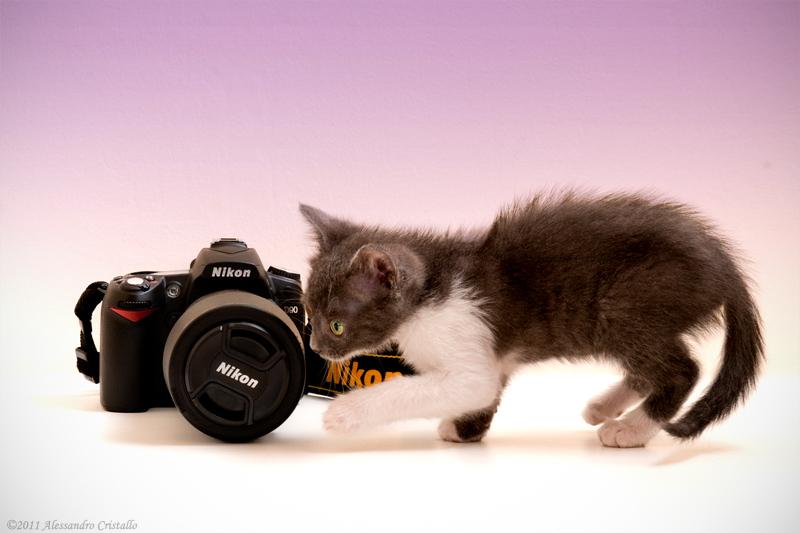 kittens like camera ...