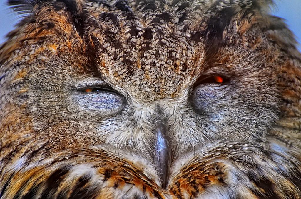 Owl by Zaratra