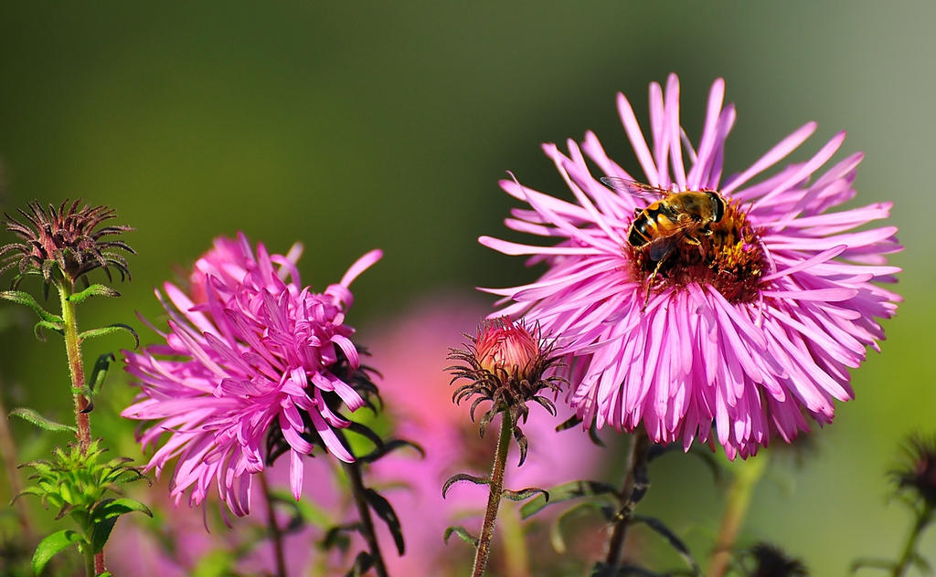 Flowers403 by Zaratra