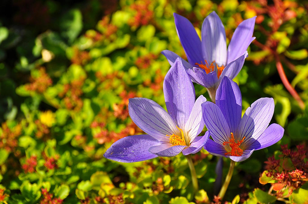 Flowers412 by Zaratra