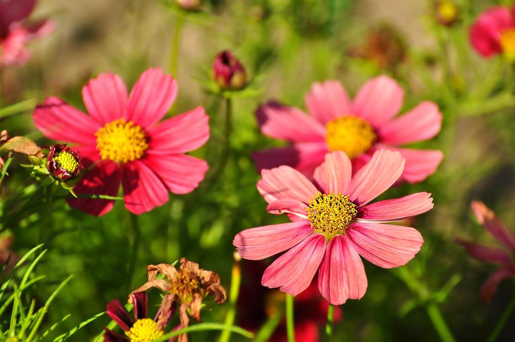 Flowers363 by Zaratra