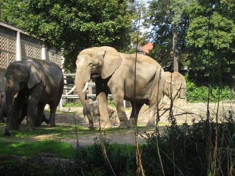 Basler Zoo 2006
