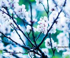 Sping 1 by dmitroza