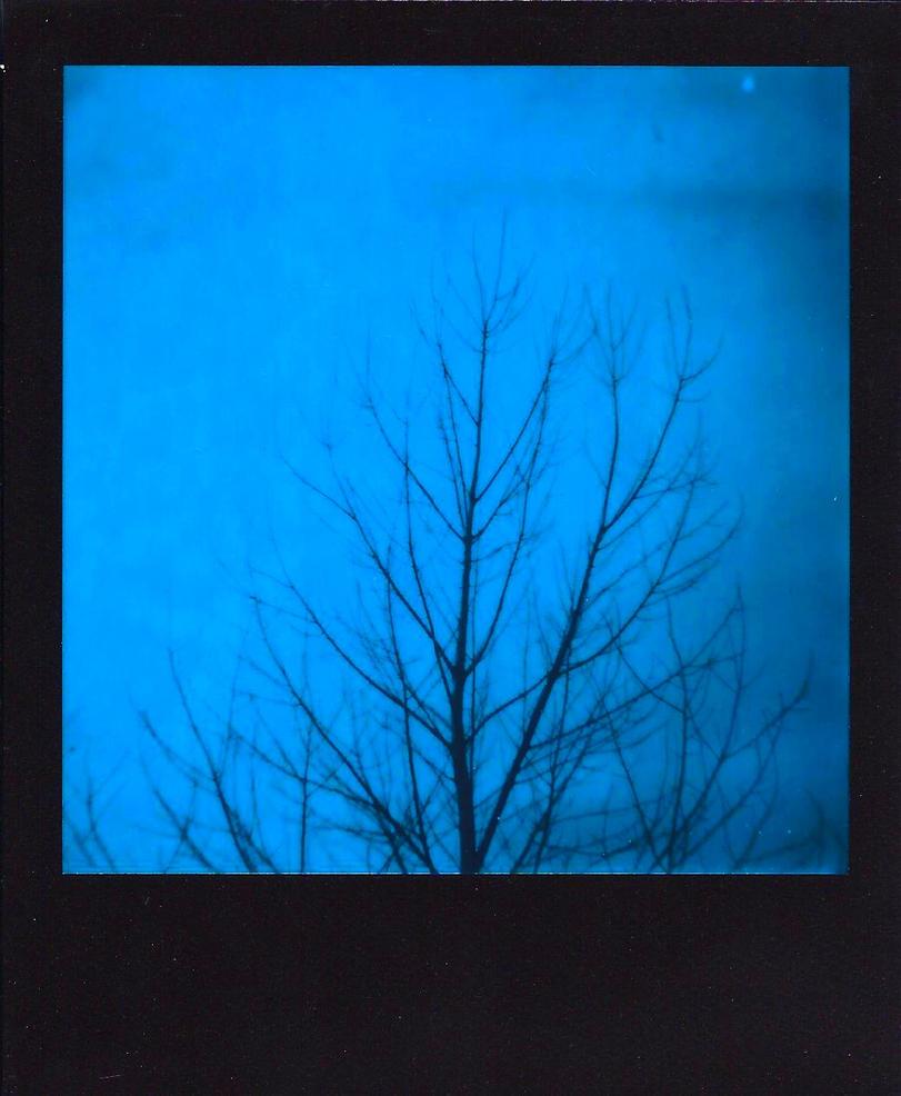 Winter Tree - Blue Polaroid by cjmartin87
