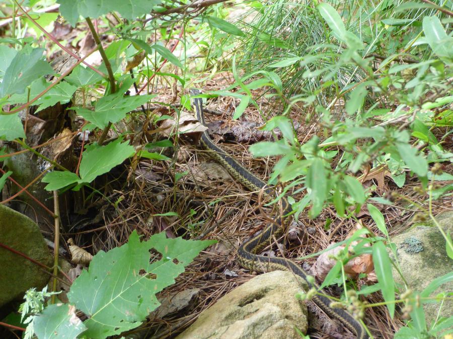 Snake on a Hike by cjmartin87