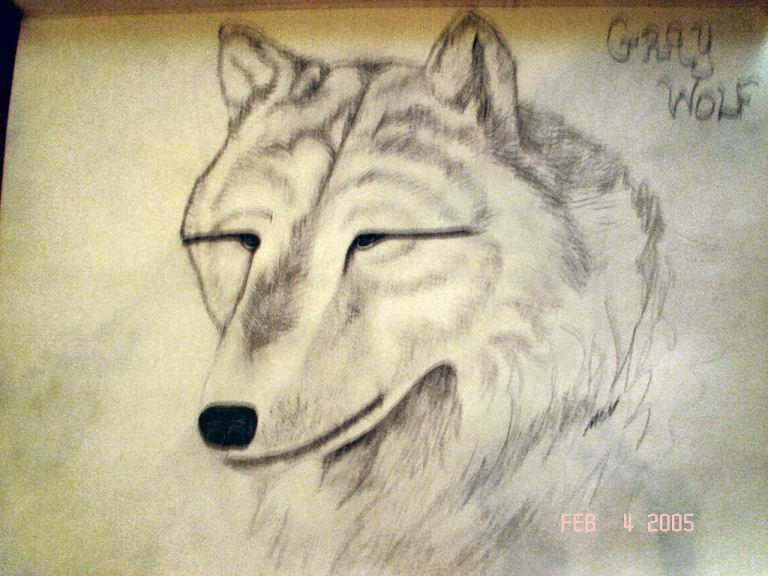 Gray Wolf by wildcatskye