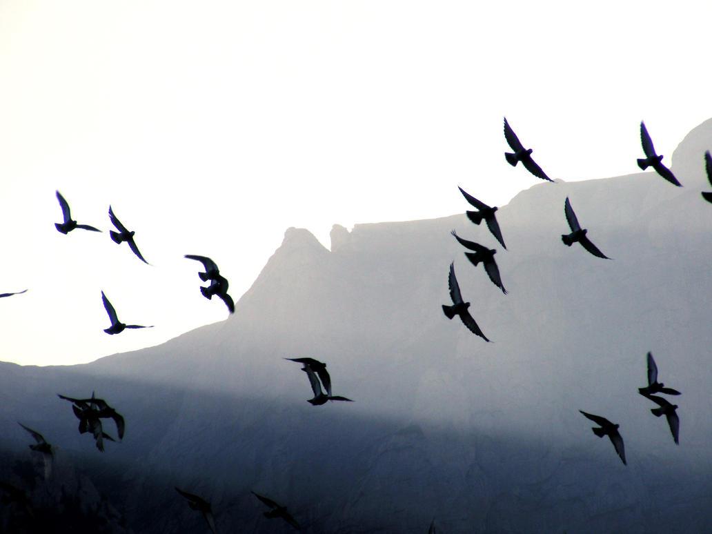 free birds by Wlad07 on DeviantArt