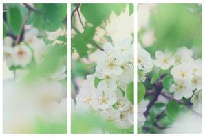 .Spring.