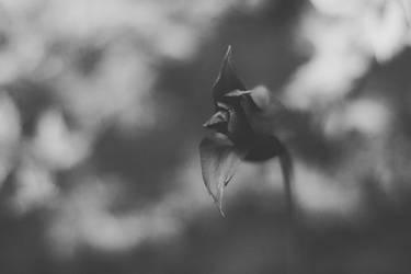 Tulip by NanaSilence