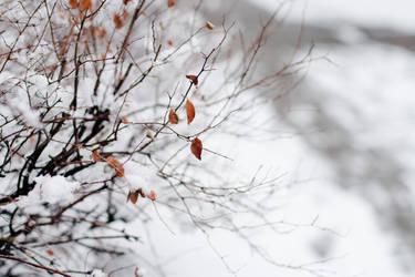 .autumn trace.