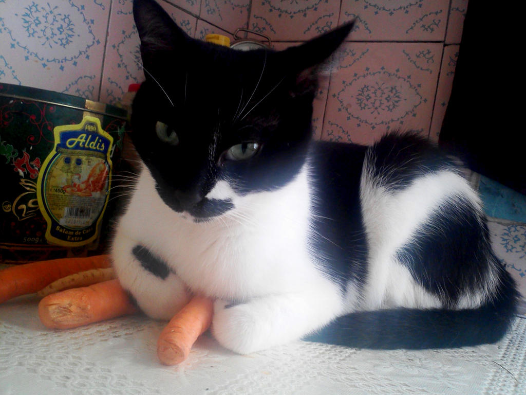 Cat on a carrot by FloriLucia