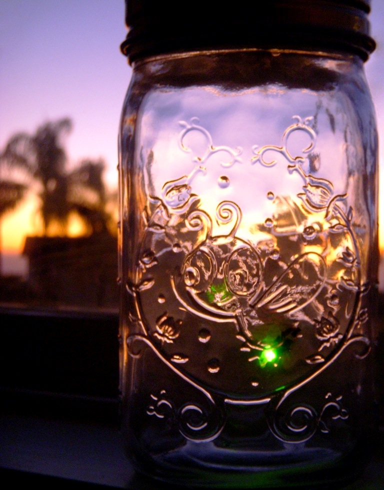 Interesting Photo of the Day: Fireflies Long Exposure |Fireflies In A Jar Cover Photo