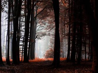 a foggy day by sarahbuhr
