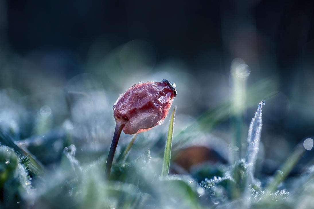 Freeze by sarahbuhr