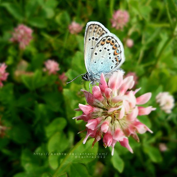 Blue Butterfly by Eachra