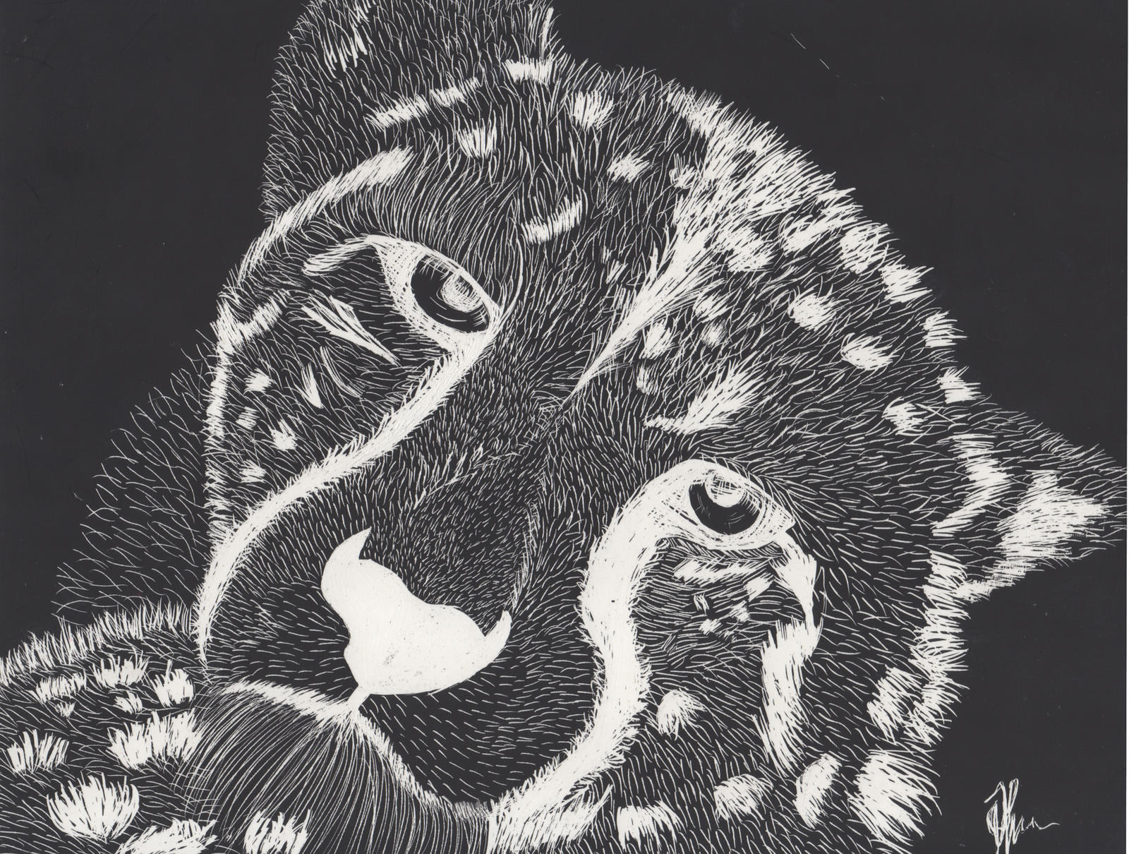 Cheetah v3 (Scratchboard) by ArtBourne