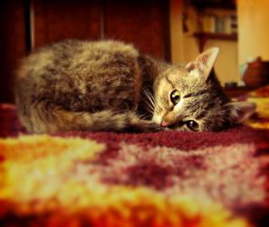 Let me sleep by KateWalker