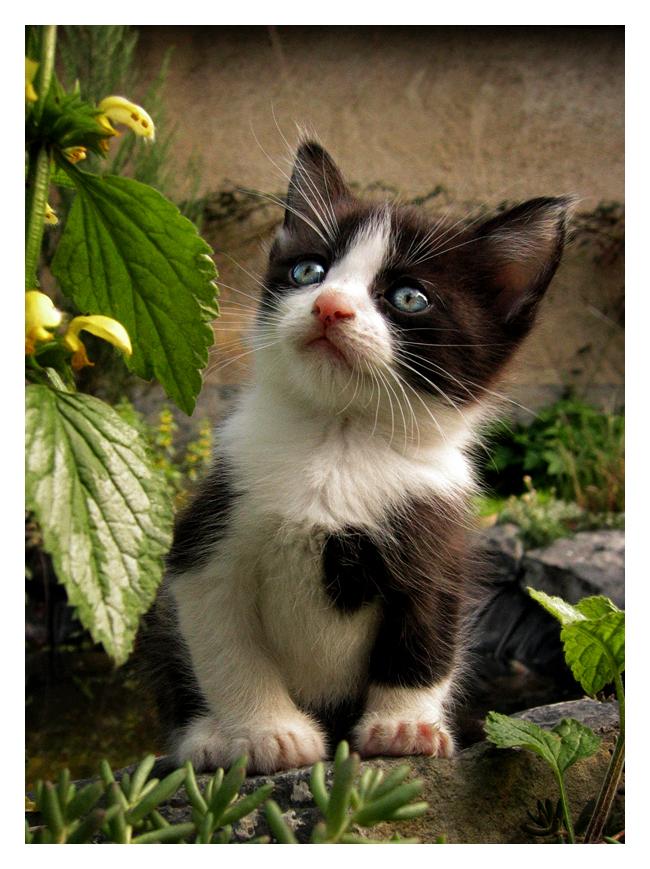Kitten by KateWalker