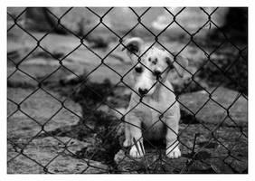 Little prisoner by KateWalker