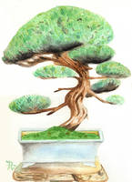 Bonsai watercolor by drianis