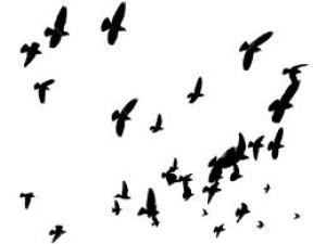BirdsAndPoetry's Profile Picture