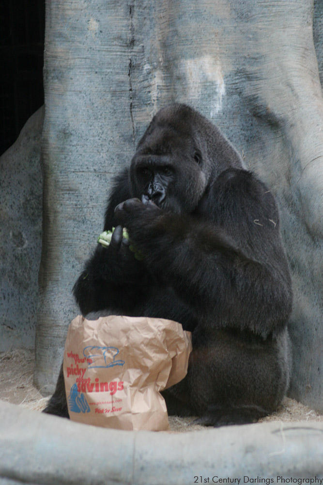 Milwaukee Zoo 23 by LeperConDios