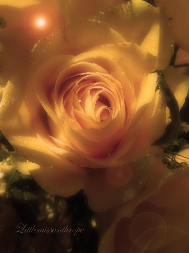 Gentle petals by littlemissanthrope