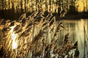 Winter sun by bardzomiprzykro
