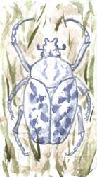 BeetleLuck by yearofbacon