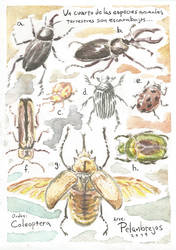 Coleoptera Aquarelis by yearofbacon