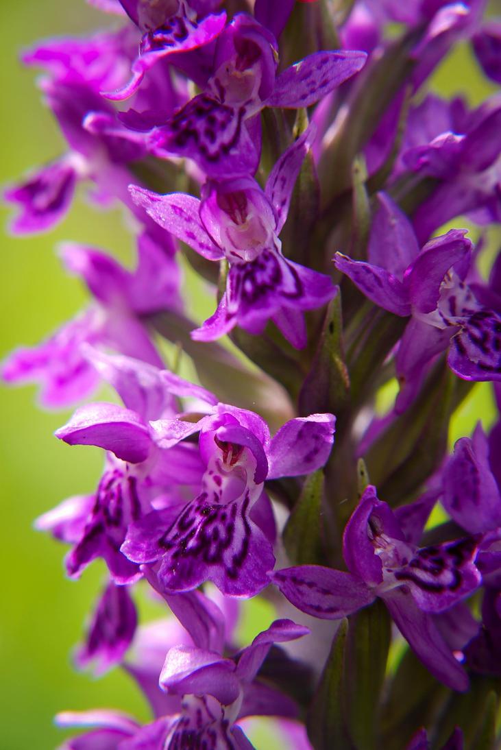Macro Purple by BusterBrownBB