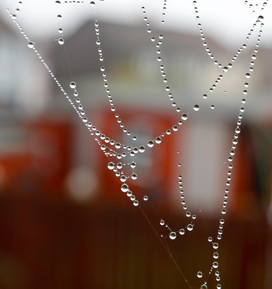 String of pearls by BusterBrownBB