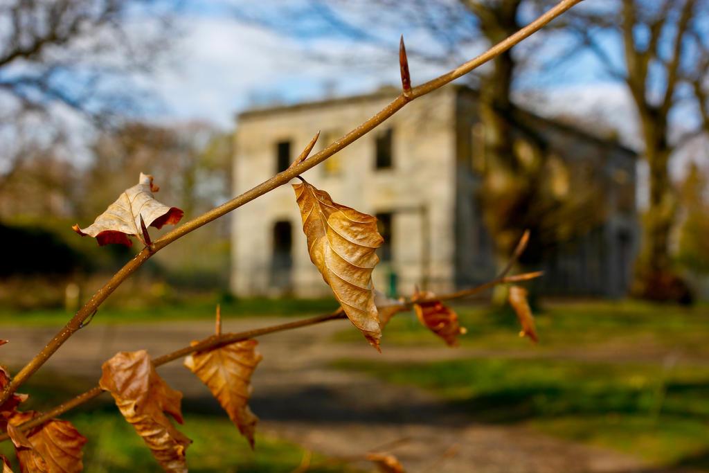 Last winter leaves by BusterBrownBB