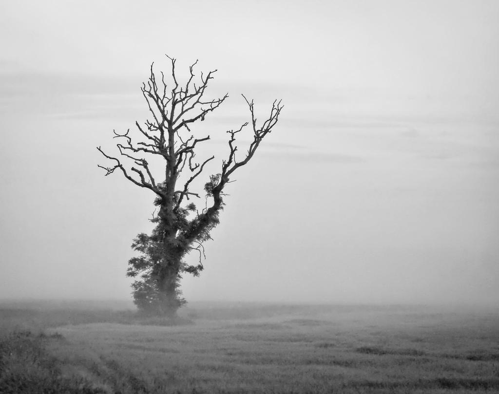 Minimalist Tree in Mist by BusterBrownBB