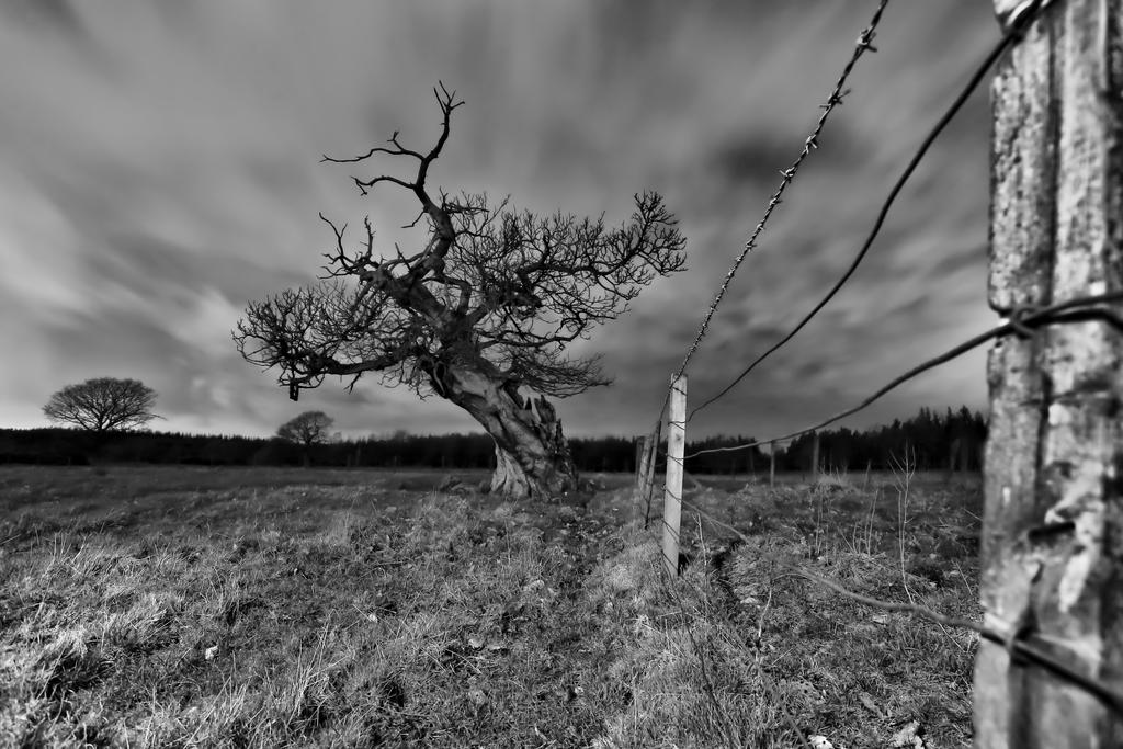 Gordon the Spooky Tree BW by BusterBrownBB