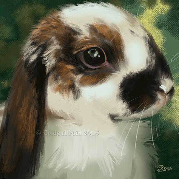 Lop Bunny SpeedPaint by GoldenDruid