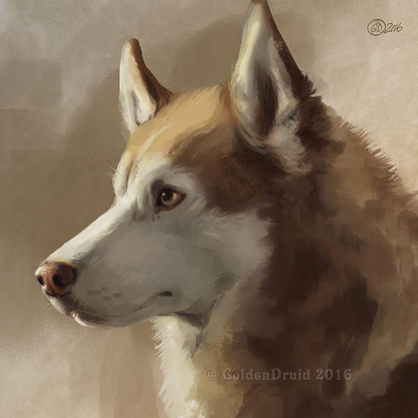 Husky Portrait SpeedPaint by GoldenDruid