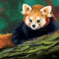 Curious Red Panda - SpeedPaint by GoldenDruid